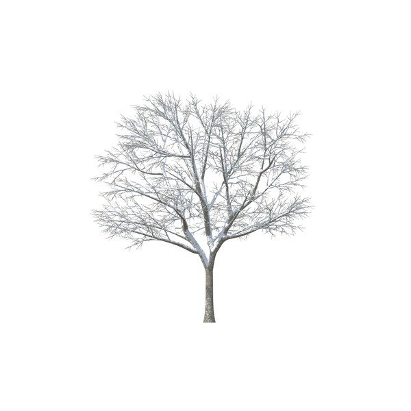 Nature Png Images Psds For Download Pixelsquid Bare Tree Png Images Image