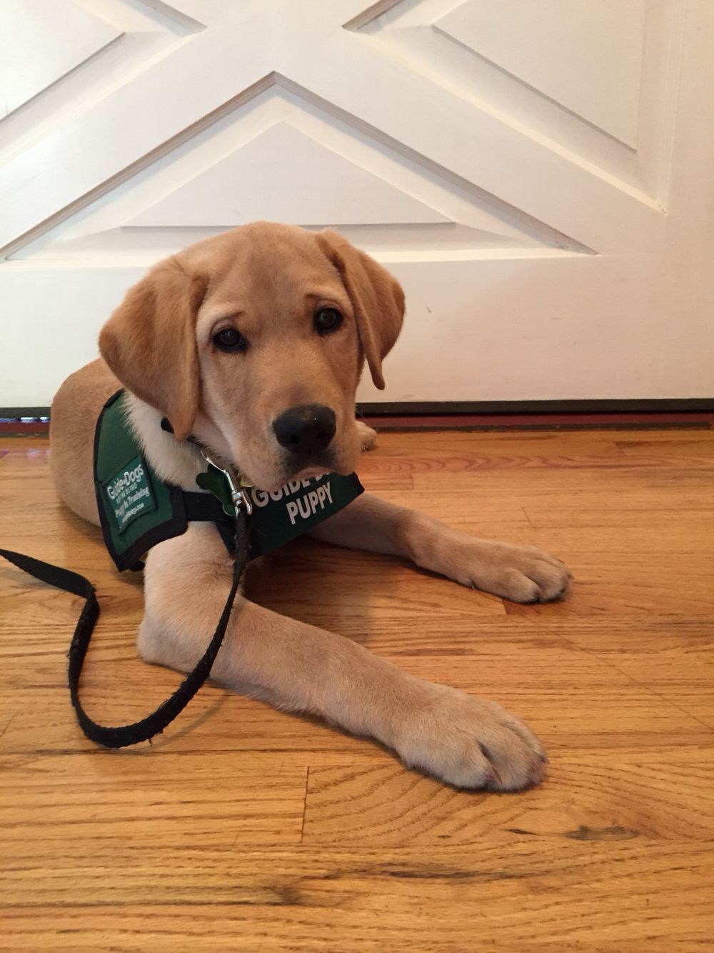 Happy National Guide Dog Day From Boise Guide Dog Service Dogs