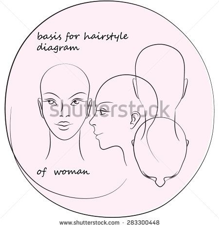Basis For Hairstyle Diagram Of Women Stock Vector Diagram