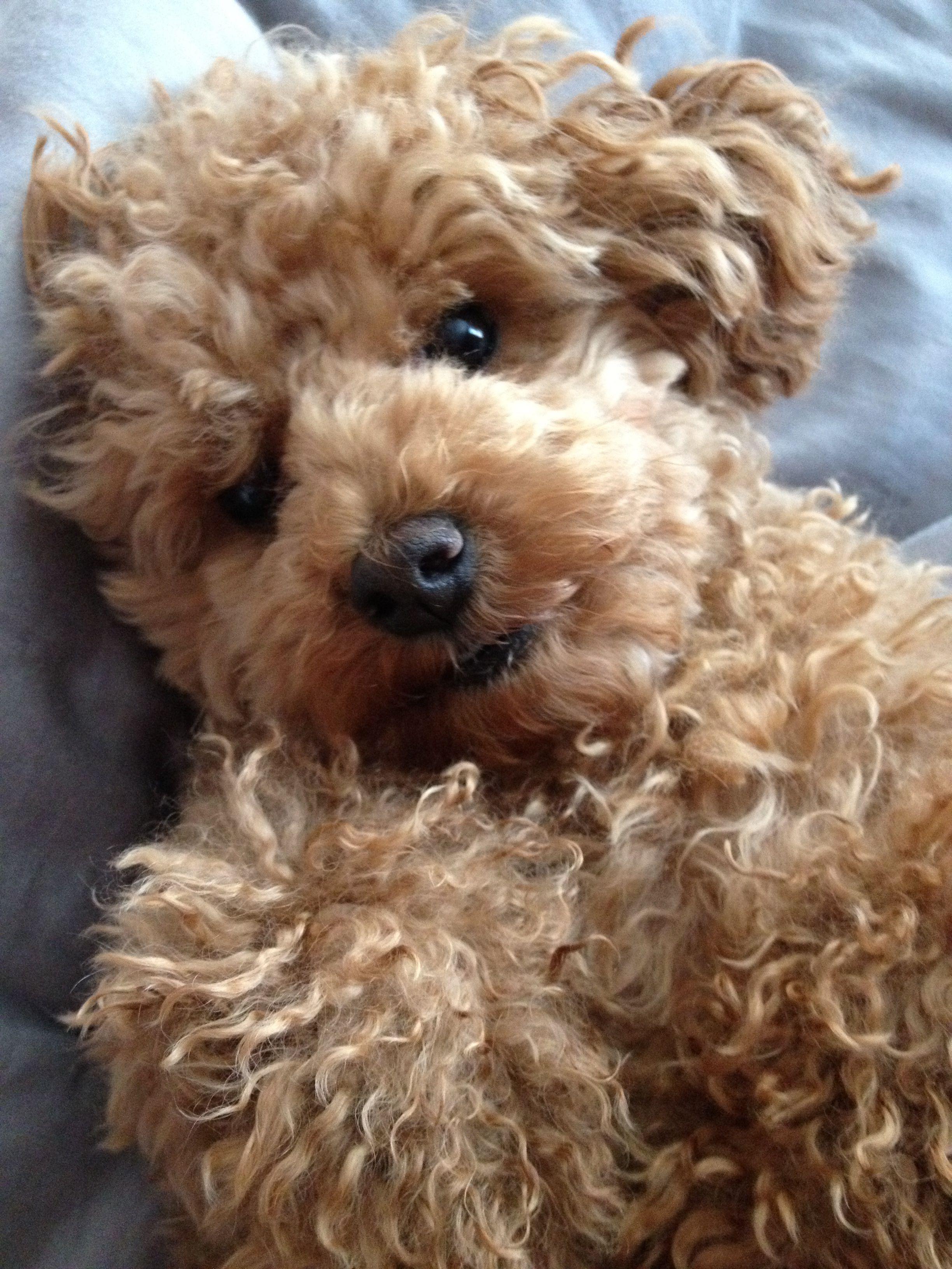 The cutest dog ever, Max, or teddy bear perhaps?! Teddy