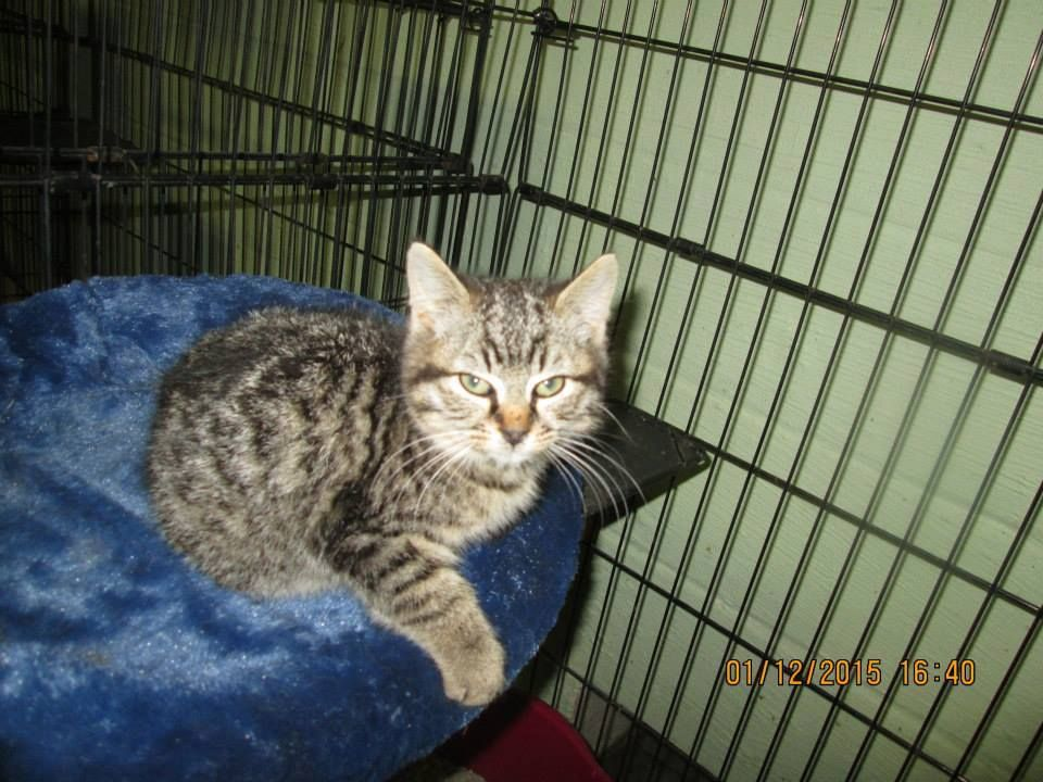 ALYSSE HAS BEEN RESCUED BY CAT ADOPTION TEAM, WILMINGTON