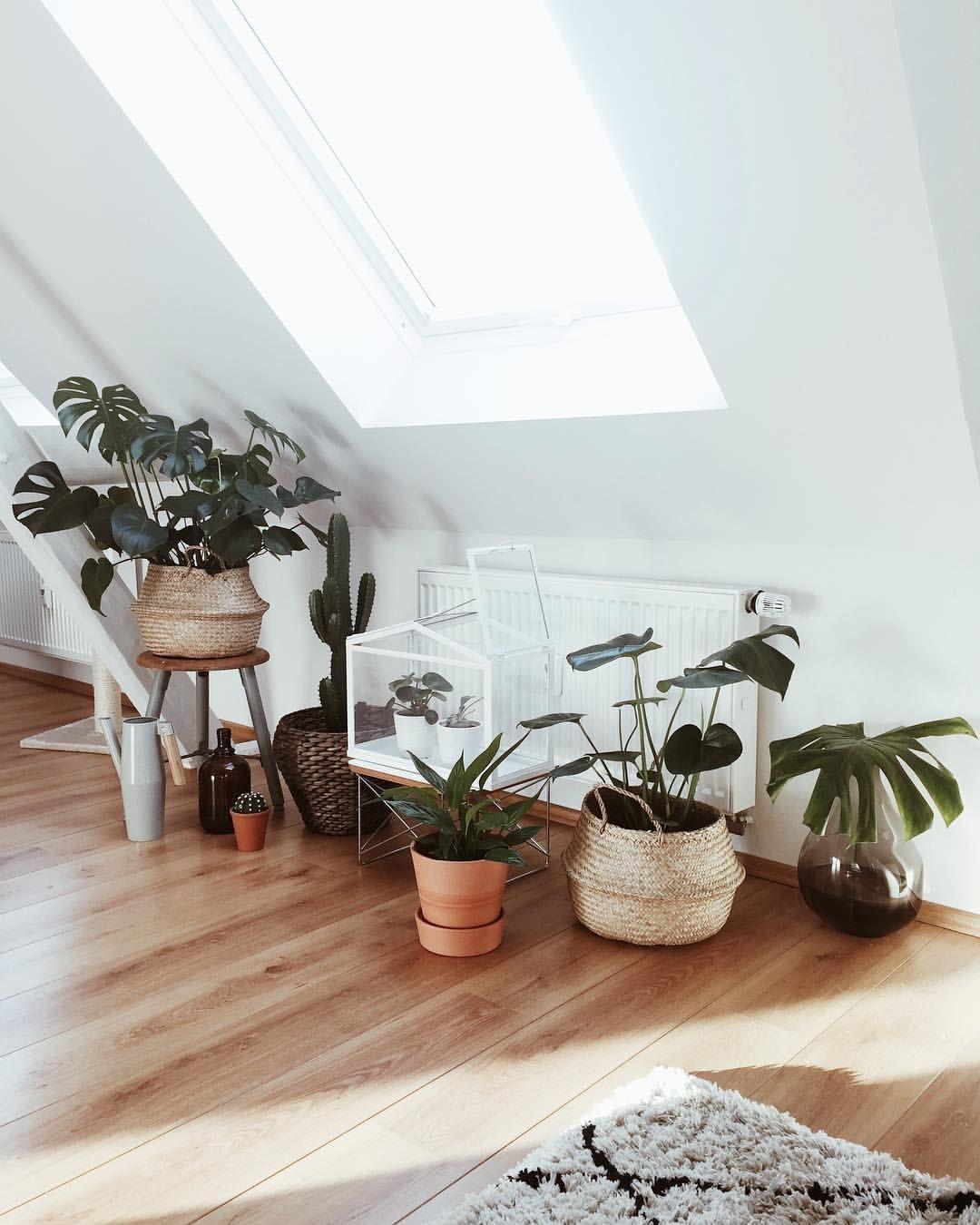 Grünpflanzen Im Schlafzimmer : pinterest h a i l e y tropische zimmerpflanzen ~ Watch28wear.com Haus und Dekorationen