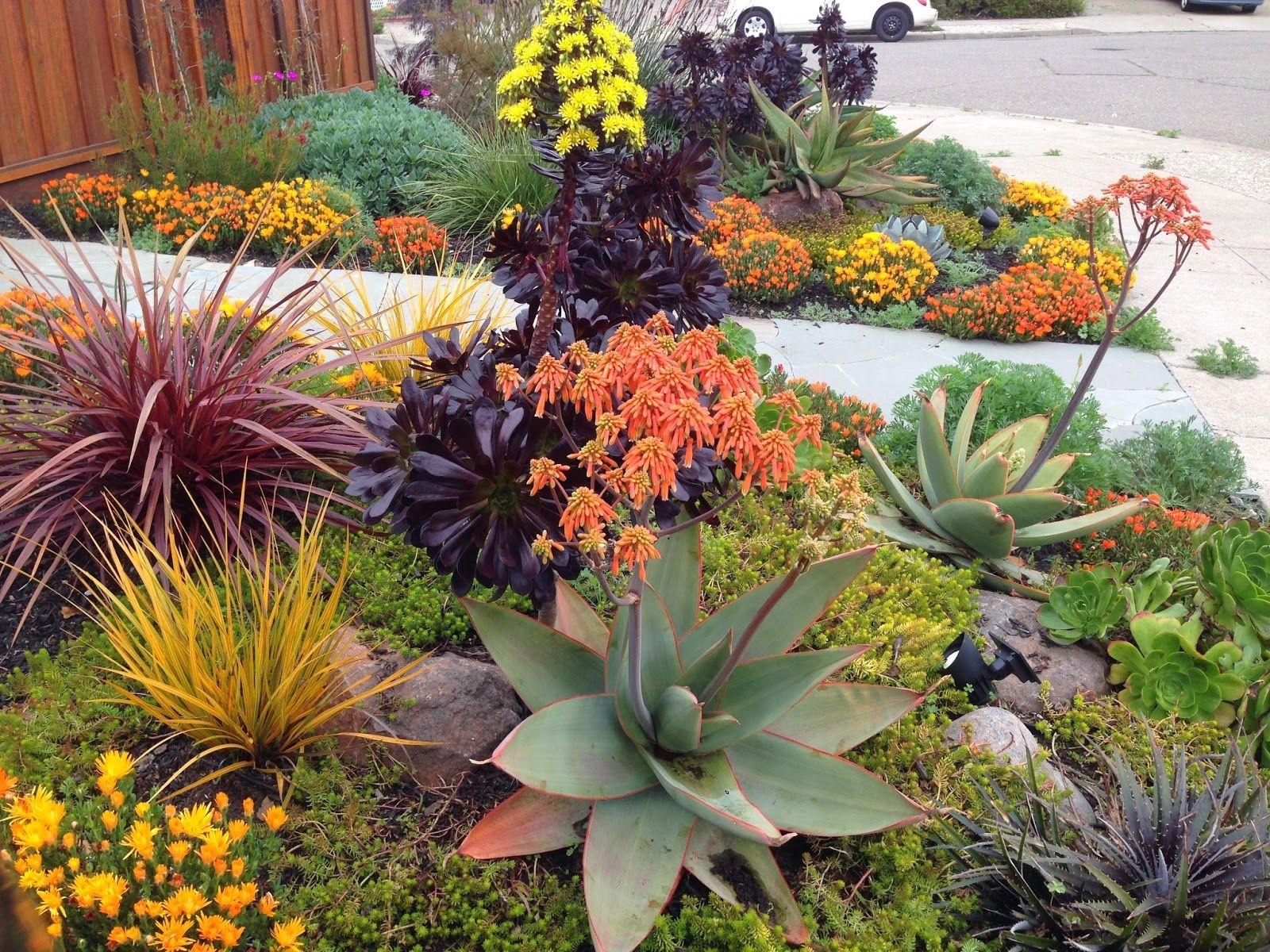 Drought Tolerant Landscapes Drought Tolerant Garden Drought Resistant Landscaping Succulent Landscaping