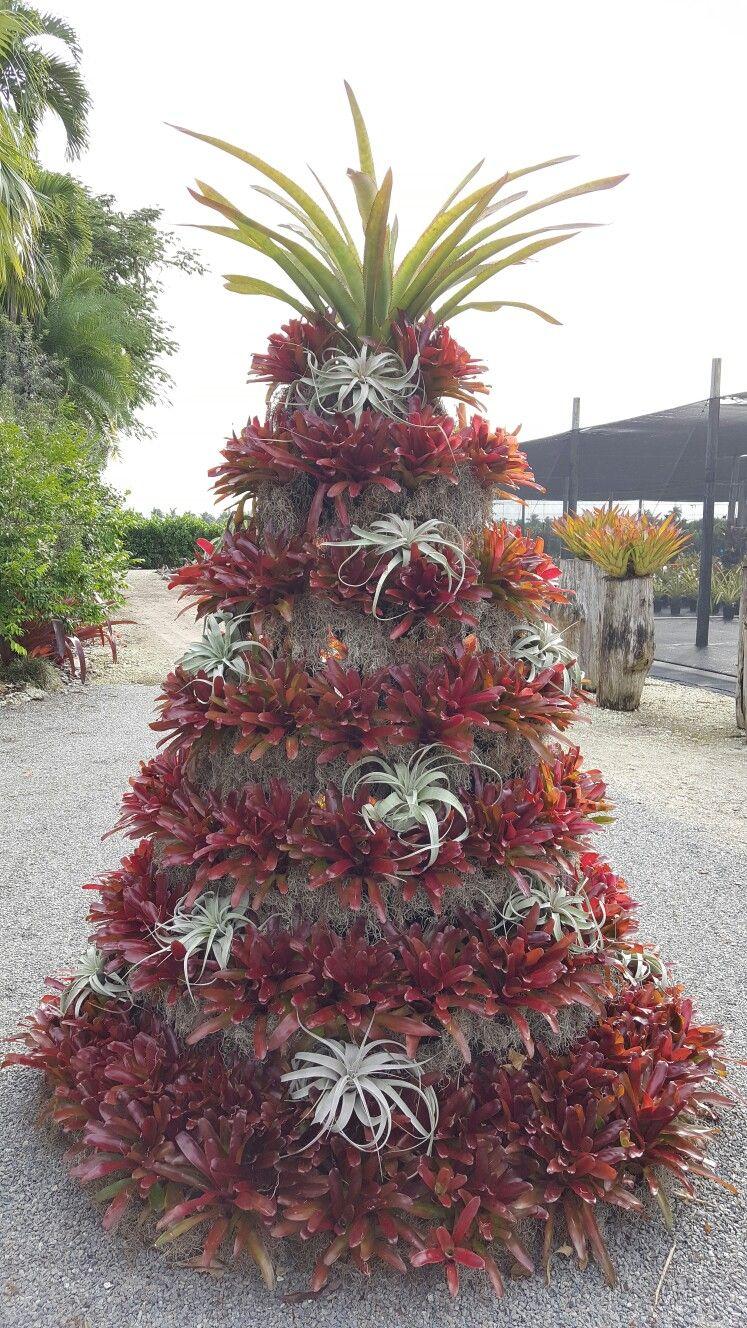 Bullis Bromeliads Exterior Christmas Tree 2016
