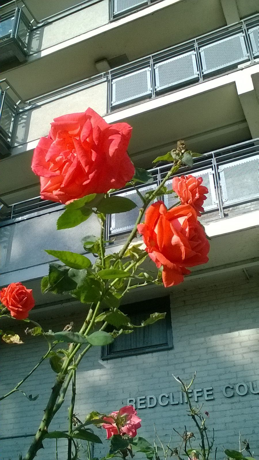 i chose this image because it shows that something beautiful can still have ugly intentions. the beautiful rose with its sharp thorns.