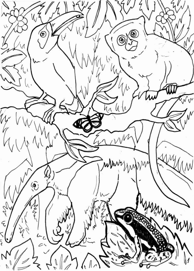 Rainforest Animal Coloring Pages Unique Coloring Pages Of Rainforest Animals Bestofcoloring Animal Coloring Pages Bird Coloring Pages Rainforest Animals