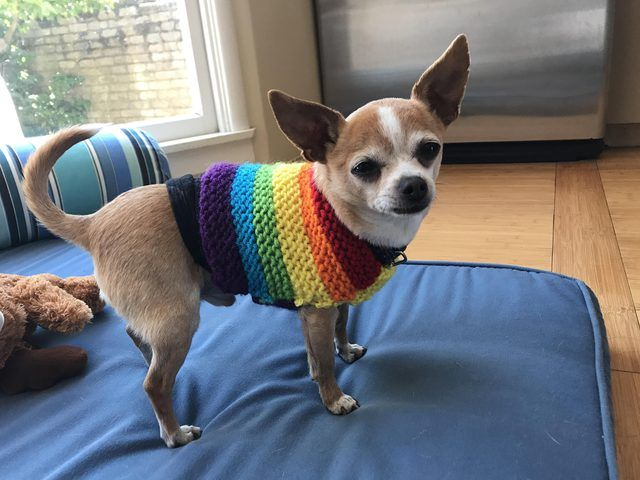 Pin By Linda Staples On Apple Headed Baby Chihuahua Puppy And Others
