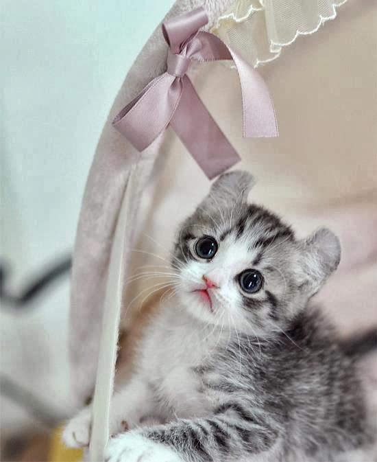Pin On Lucu Kucing Imut
