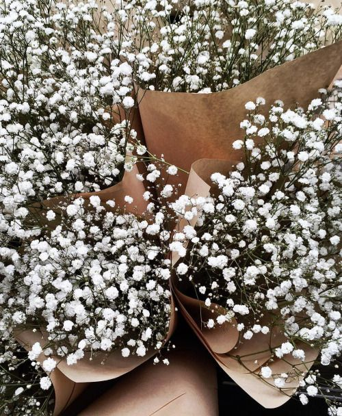 Gypsophila Blooms Captured By Lisa Hamilton From See Want Shop Flower Aesthetic Babys Breath Little Flowers