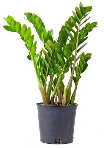 Pinterest – Пинтерест on jade plant home depot, indigo plant home depot, lipstick plant home depot,