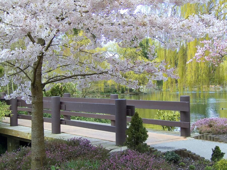 Spring In Vancouver B C Canada Canada Travel Spring Flowers Garden Landscape Wallpaper Beautiful Nature Japanese Garden