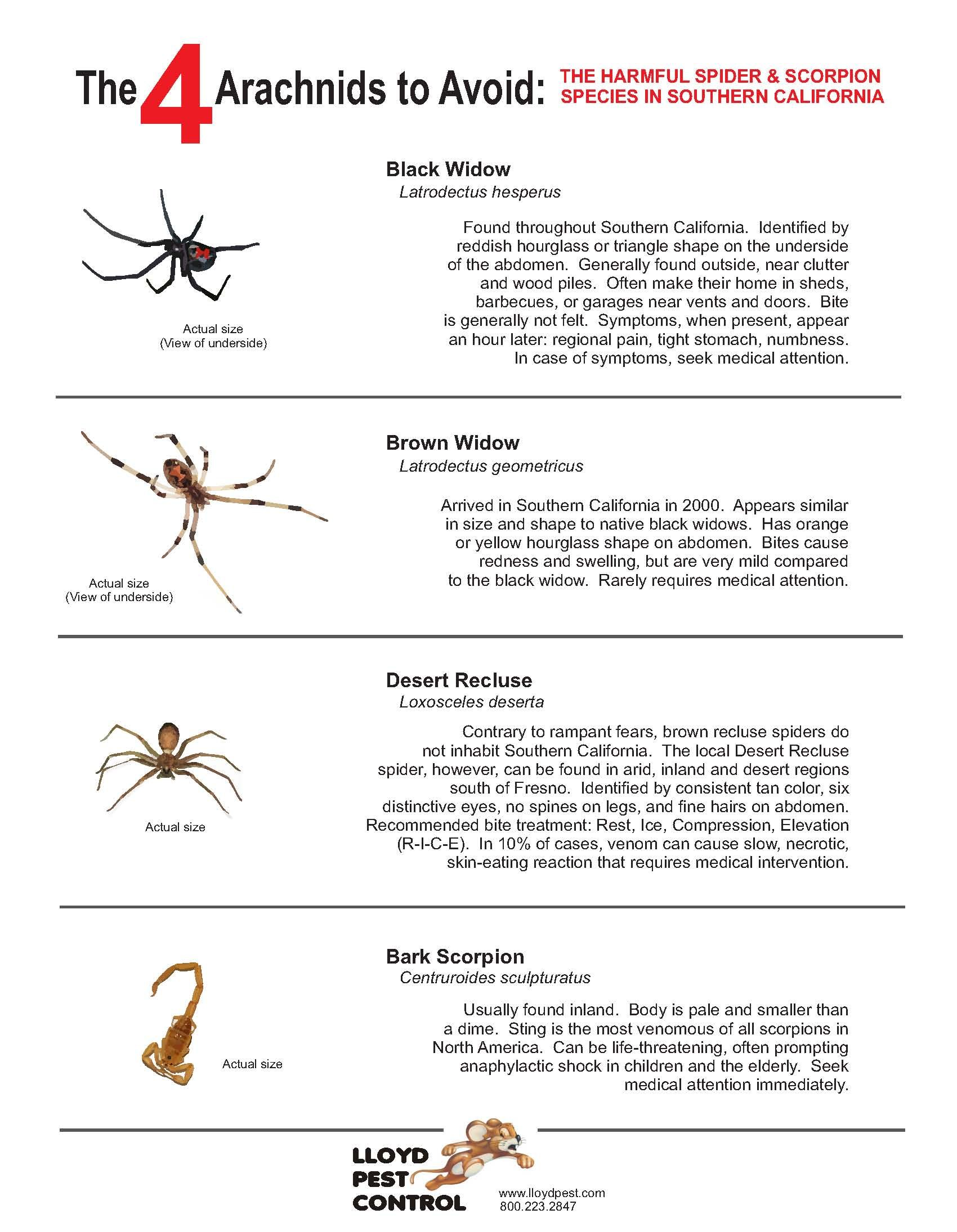 100 yellow sac spiders facts prevention most common for How to stop spiders coming in your house