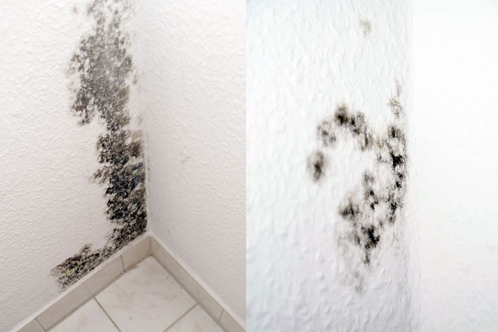 Mold Help What Is It And Why Is It So Bad Mold In Bathroom New Bathroom Ideas Wall Molding
