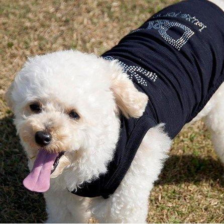 Camiseta para Cachorro Caveira Power Dolce & Cane - MeuAmigoPet.com.br #petshop #cachorro #cão #meuamigopet