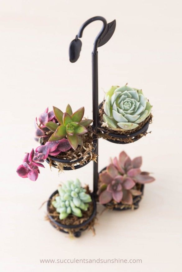 This is such a cute way to reuse an old spice rack! Succulents really can be planted in anything!