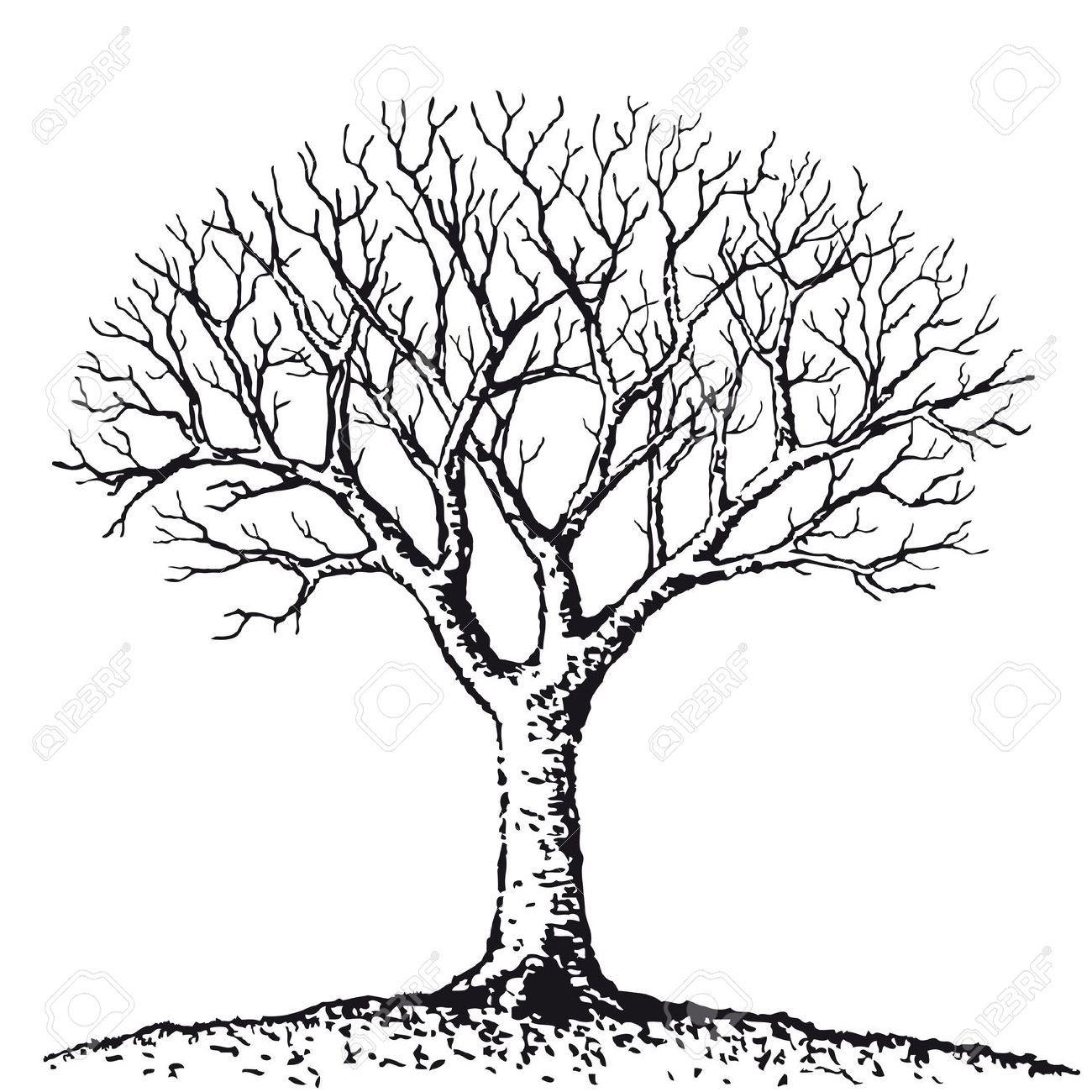 10526508-Bare-tree-Stock-Vector-trees.jpg (1300×1300