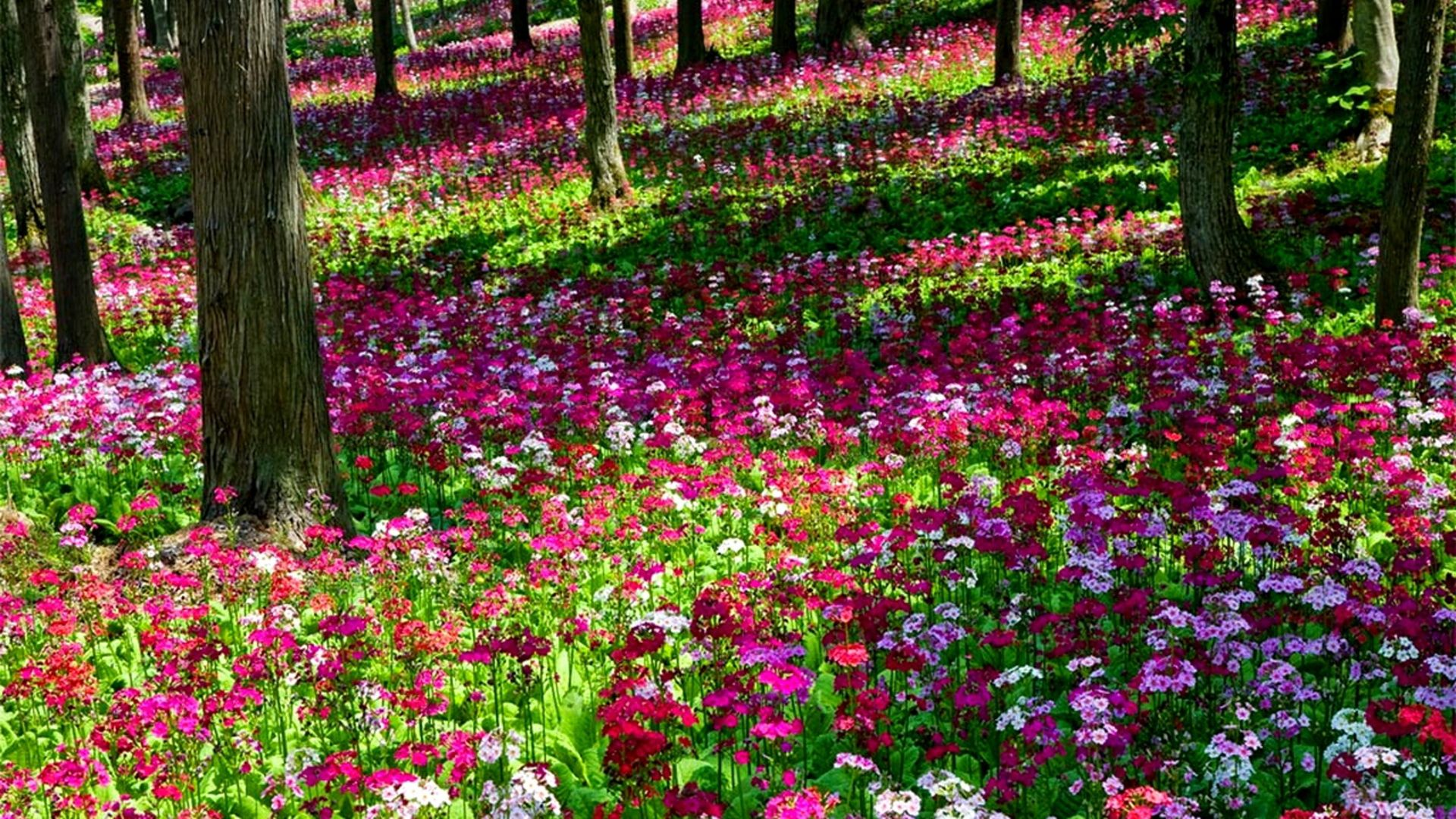 Beautiful Gardens With Pink Beautiful Multi Colored