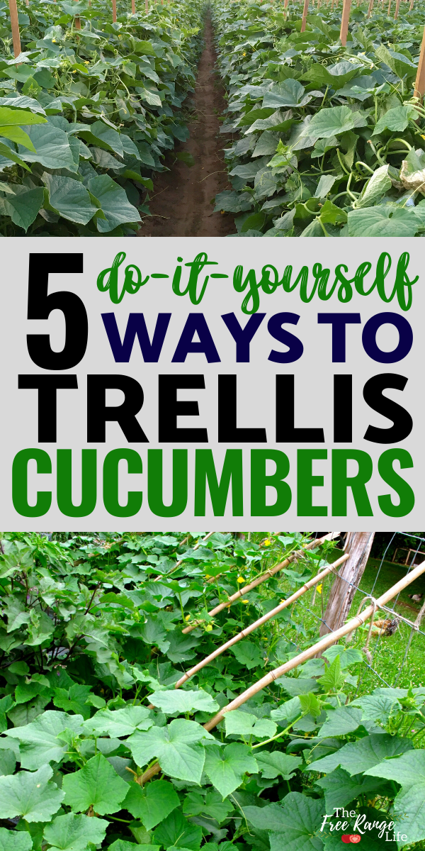 5 DIY Trellis Ideas for Cucumber