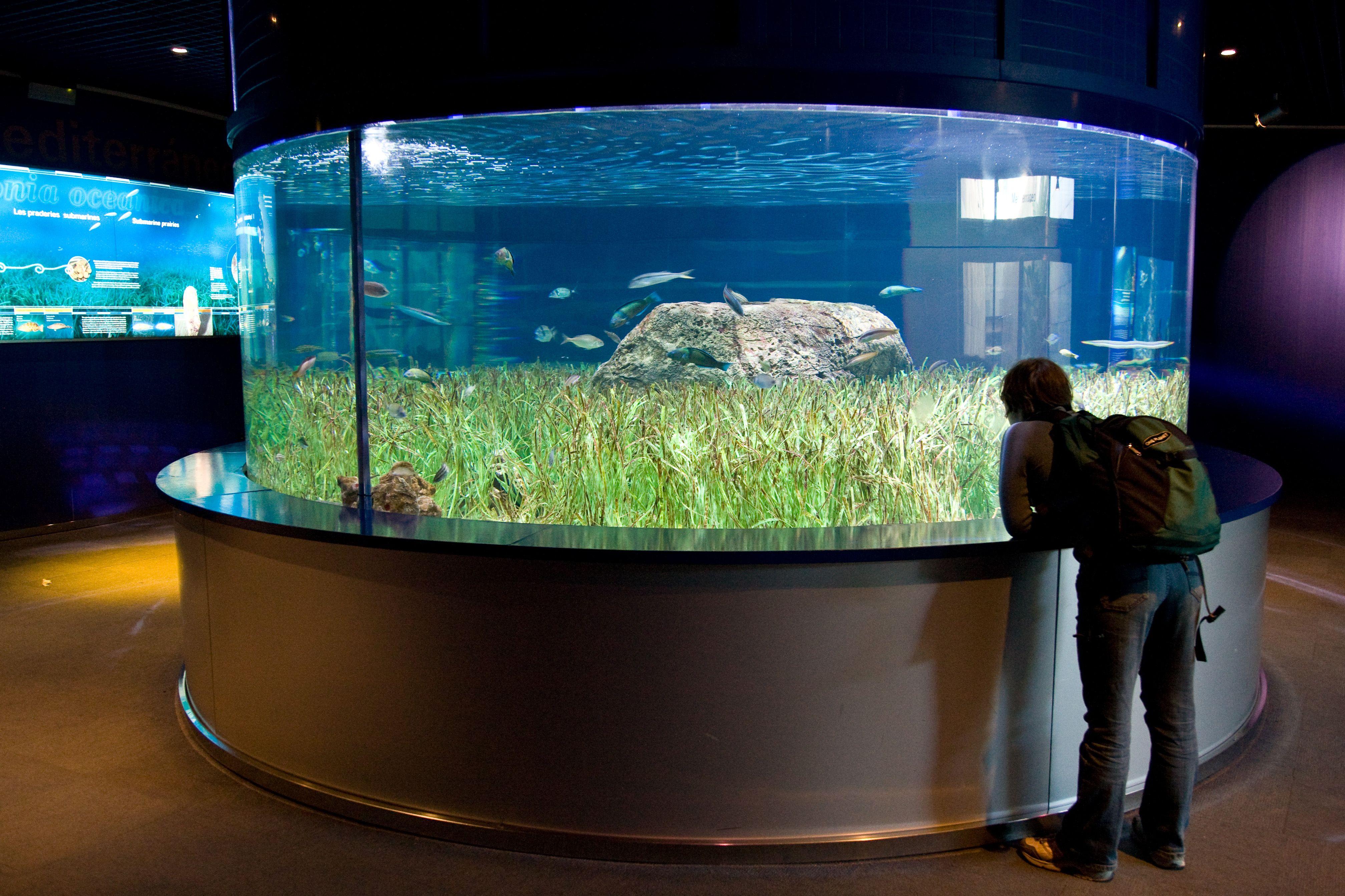 Posts About Aquariums In Texas Aquariums Aquariums In San Antonio Aquariums For Sale Aquariums Near Me Aqua Aquarium Design Zoo Architecture Aquariums For Sale