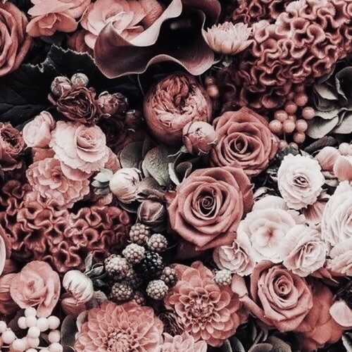 Image Discovered By Aesthetics Find Images And Videos About Flowers Theme And Aesthetics On We Heart It The App To G Flowers Pretty Flowers Plant Aesthetic