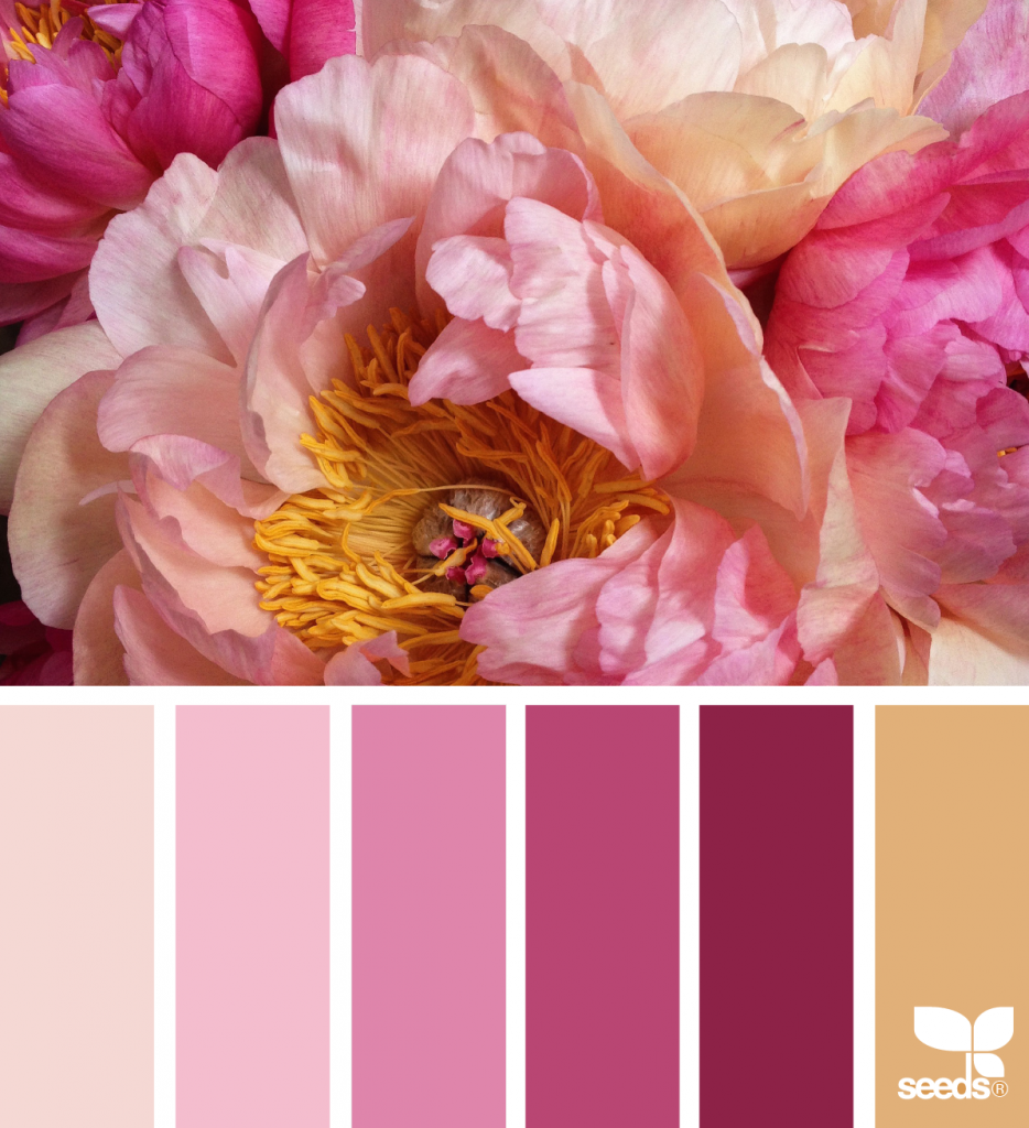 Flora Hues | Design seeds, Flora and Color inspiration