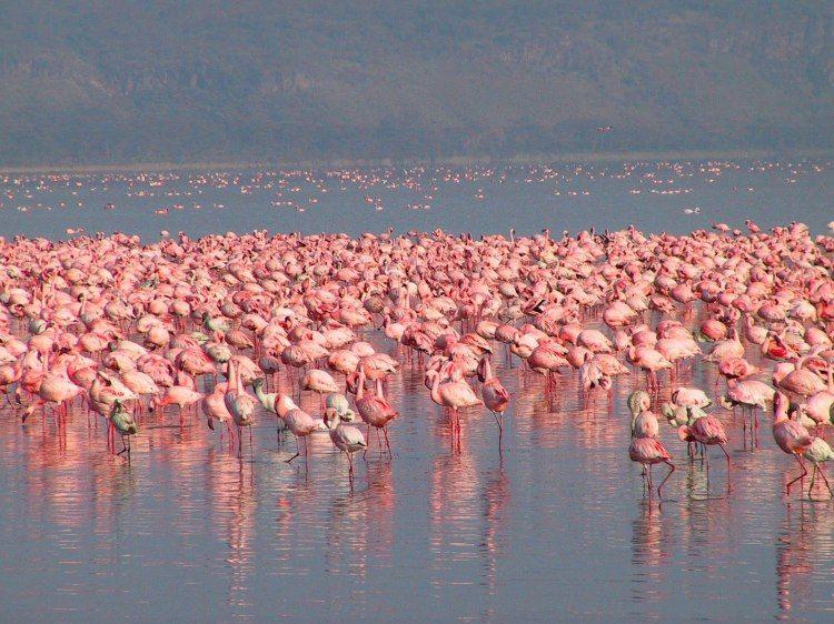 Lake Nakuru: A Birding Paradise in Kenya - Tripatini