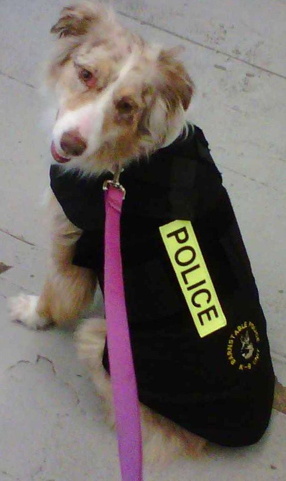 Cookie With A Police Dog Vest On Doesn T She Look Great