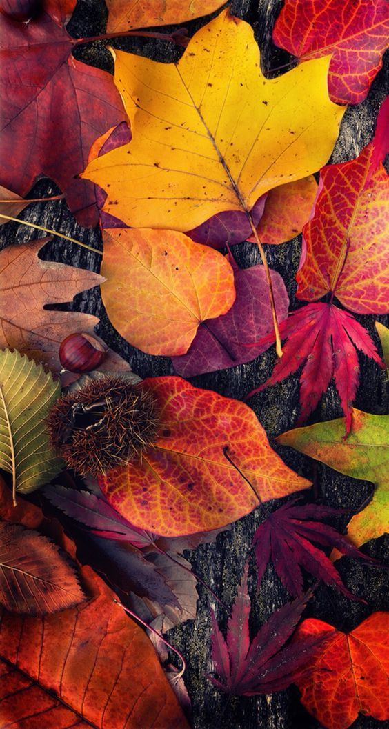 Fall iPhone Wallpapers - 30 Cute Fall iPhone Background Ideas for FREE Download #falliphonewallpaper