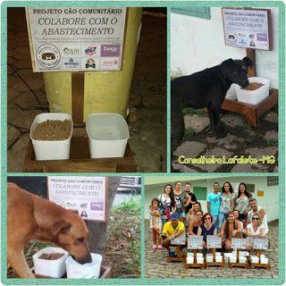 """""""O Grito do Bicho"""": Cão comunitário: projeto doa água e ração para ani..."""