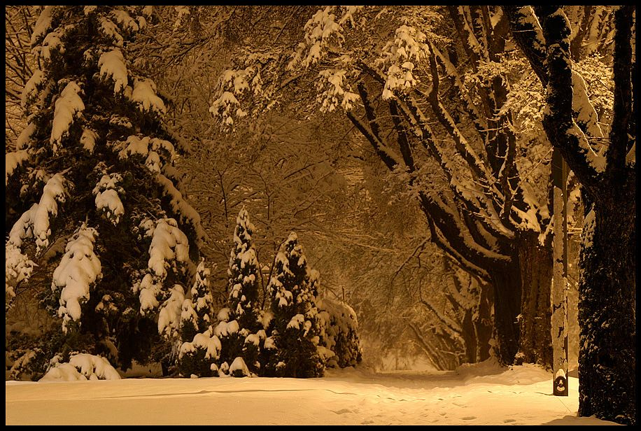 There's nothing like the glow of a snow-filled night. The snow takes on it's own ethereal light!