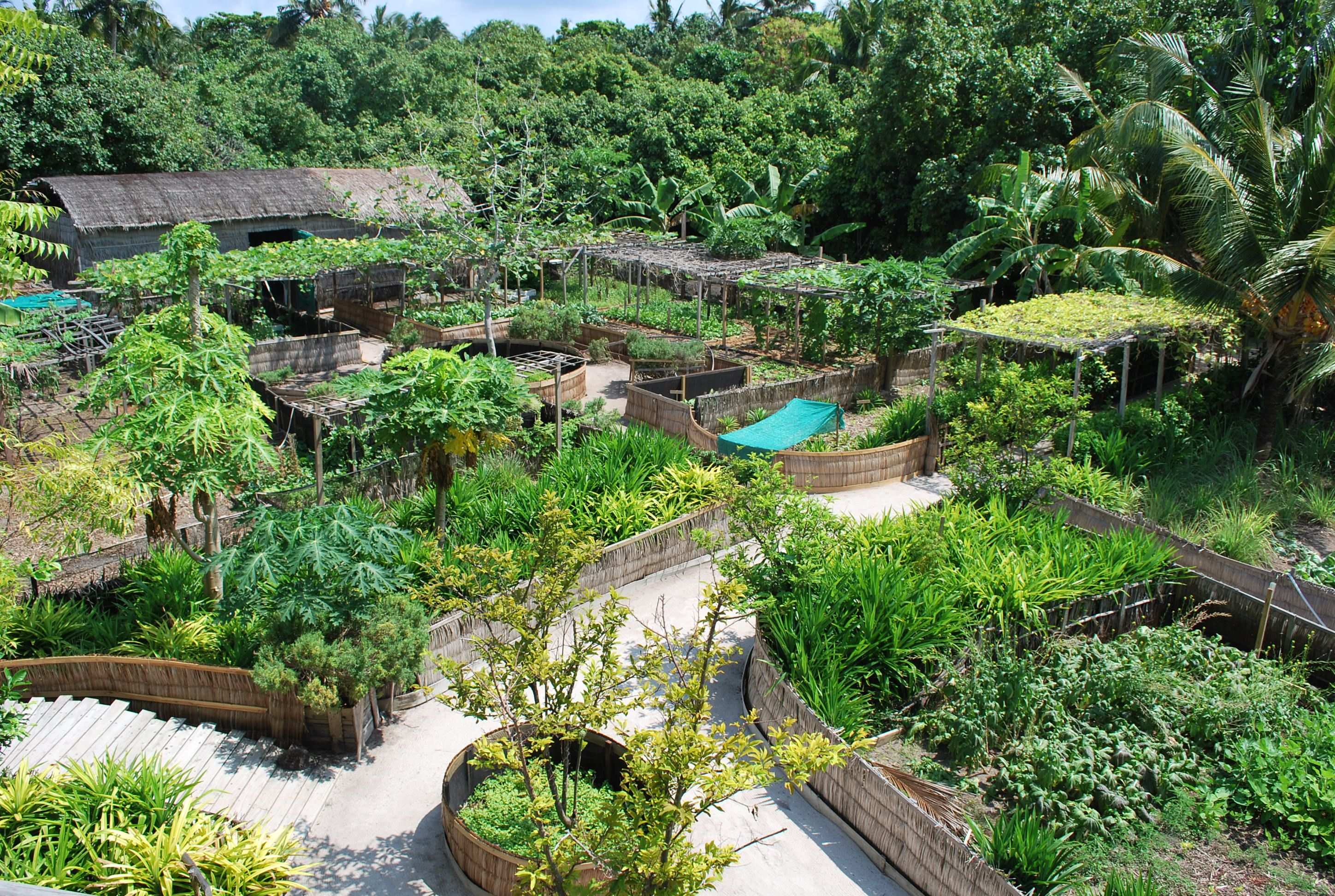Pin on Gardening and sustainable farming