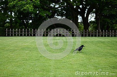 Crow In Castle, Japan - Download From Over 52 Million High Quality Stock Photos, Images, Vectors. Sign up for FREE today. Image: 83699918