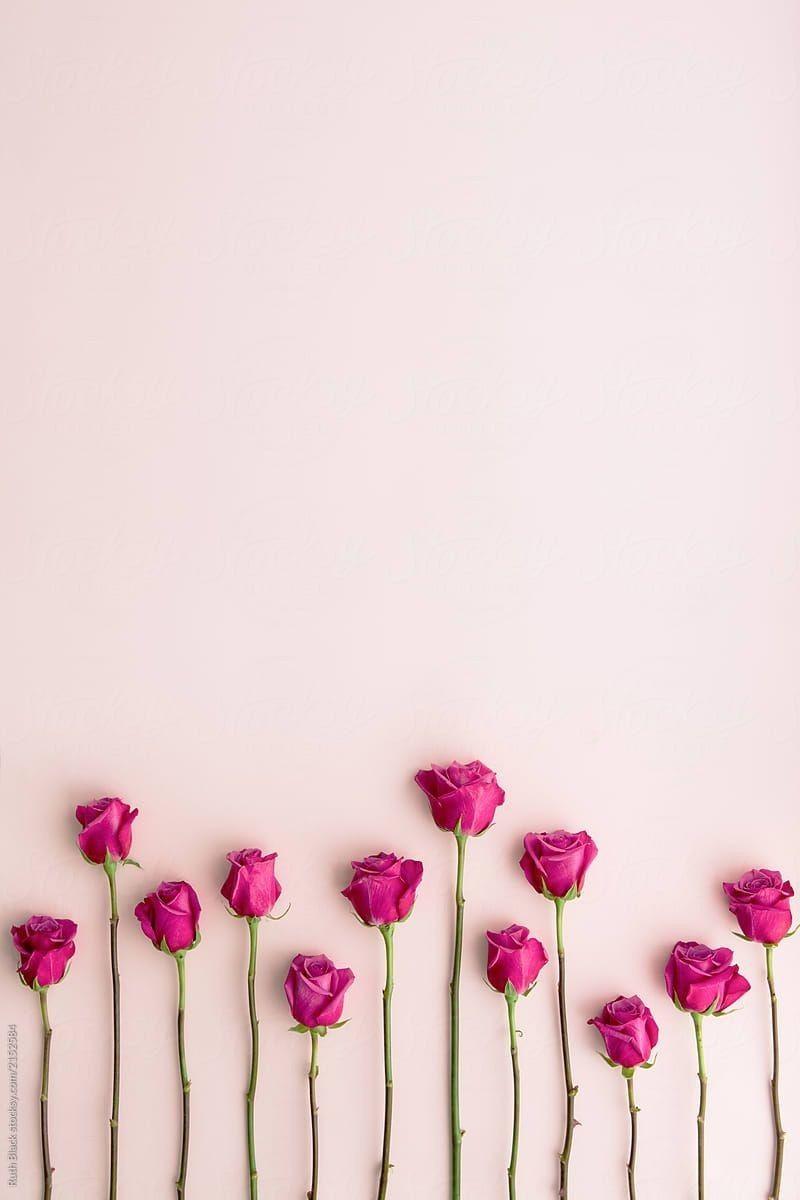 Pin Oleh Fitrasari Di Pink Wallpaper Backgrounds | Logo Bunga, Mawar Pink,  Mawar Cantik