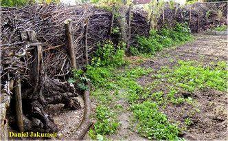 Totholz Totholzzaun Totholz Naturgarten Deadwood Wildlife Garden Naturgarten Garten Obstgarten