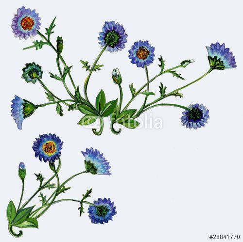 botanische zeichnungen blaubeere - Google Search