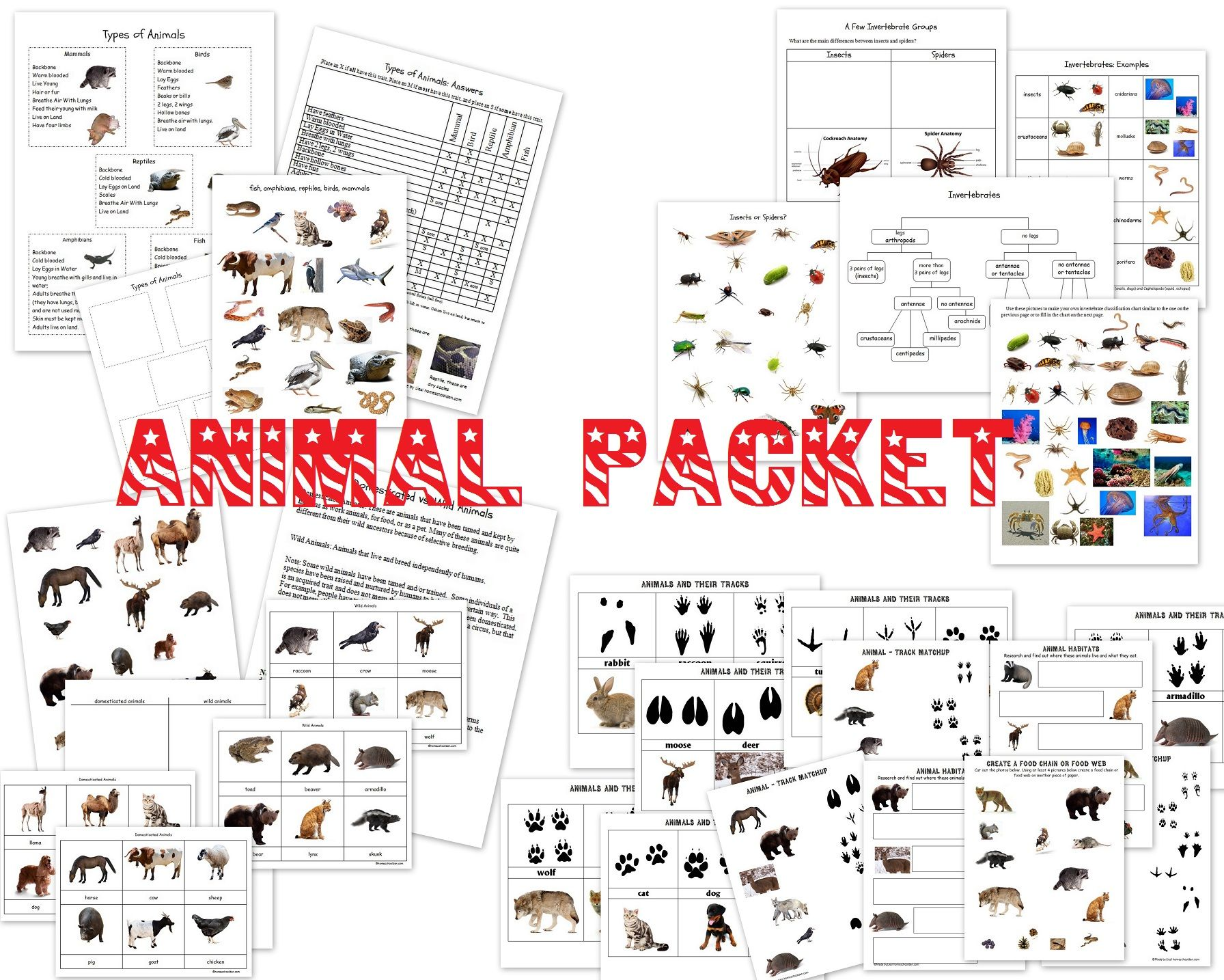 Worksheets Animal Classification Worksheet animal characteristics worksheets classification biology classification
