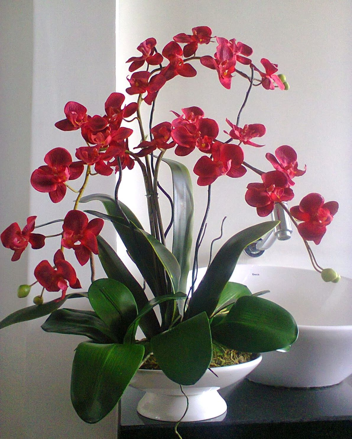 Pin by marilou chu on orchid pinterest orchid flowers and plants