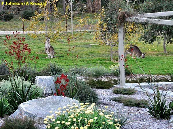 Garden designs australia dxzcbn garden design for Garden ideas australia