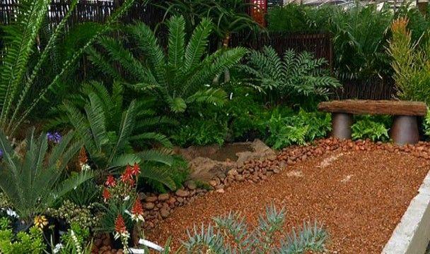 Charmant Cycad Garden · Home ChannelPlant SpeciesGarden DesignYard Design