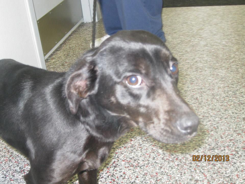 DOXIE IN NEED Katia Sidonie Equale shared Urgent