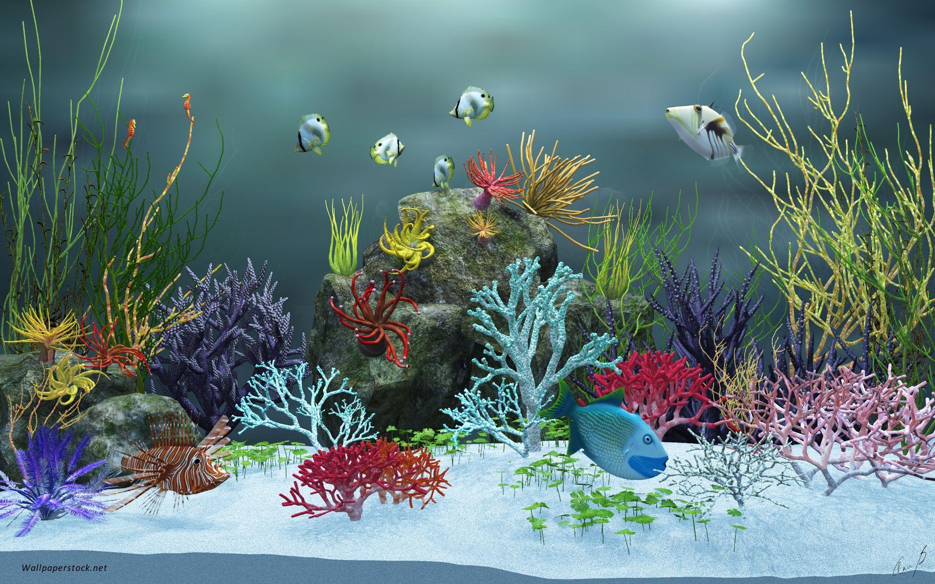 Zeovit Reef Aquarium Wallpaper for Computer by Alexander Girz