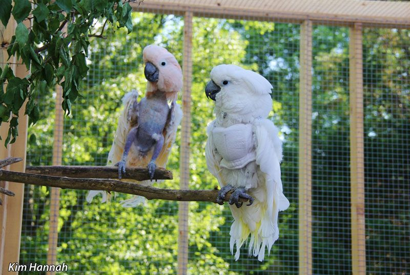 """""""The Unconventional Guide to Cockatoos, Part II"""