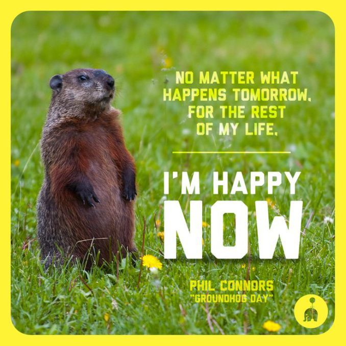 Happy Groundhog Day Motivational Wishes Quotes Happy Groundhog Day Happy Groundhog Day Groundhog Day Quote Of The Day