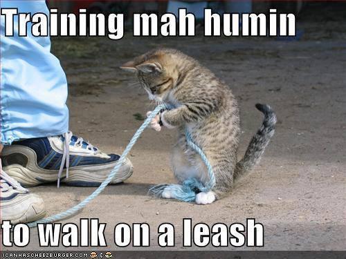 Funny Training Meme : Human training meme slapcaption misc funny sad excited