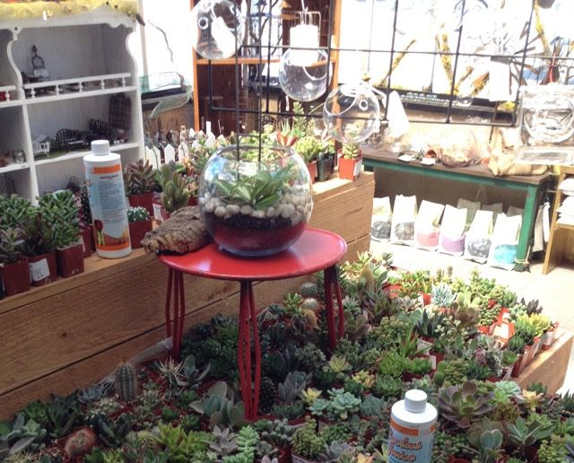 Portland Nursery At 9000 Se Division Oregon Pinterest