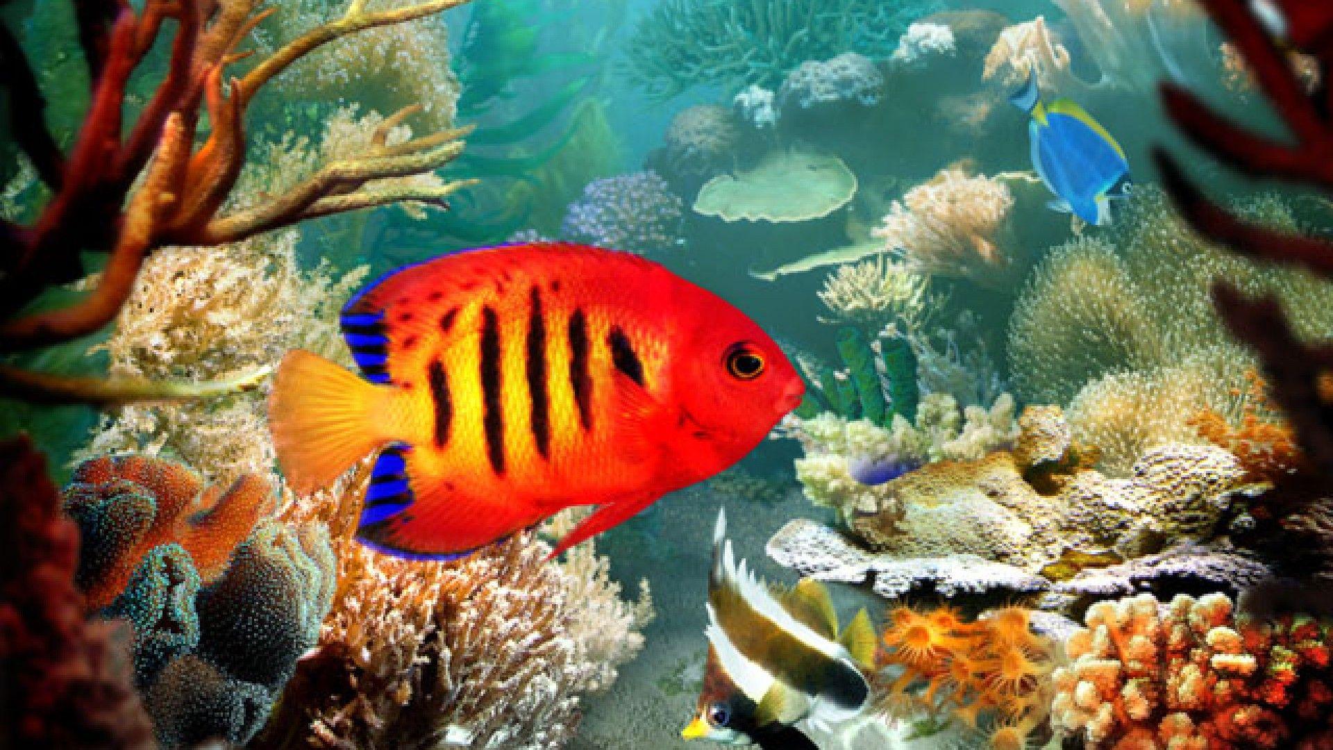Homepage » Fish » Tropical Fish 3D wallpaper | Tropical Fish ...