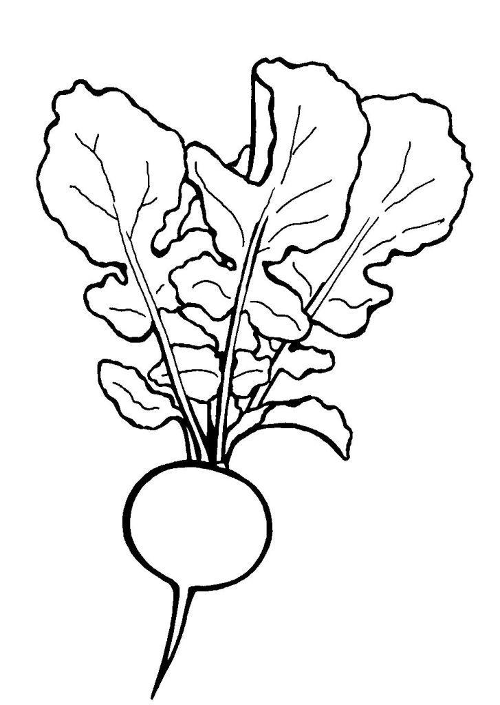 Pingl par herman chantal sur dessin et illustration - Dessin de legumes ...