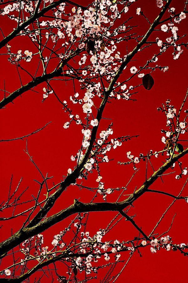 White On Red By Arkamitra Roy Via 500px In 2020 Red Wallpaper Red Background Aesthetic Wallpapers