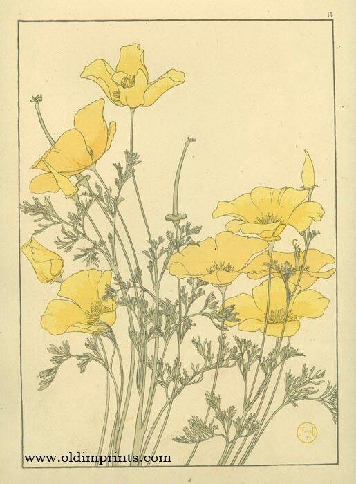 Art Nouveau Inspired California Poppy By Mason Larose: Pin By Hilary Andrew On Tattoo Me