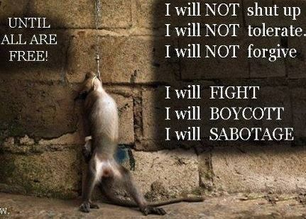 66 Twitter Animal Liberation End Speciesism Go Vegan